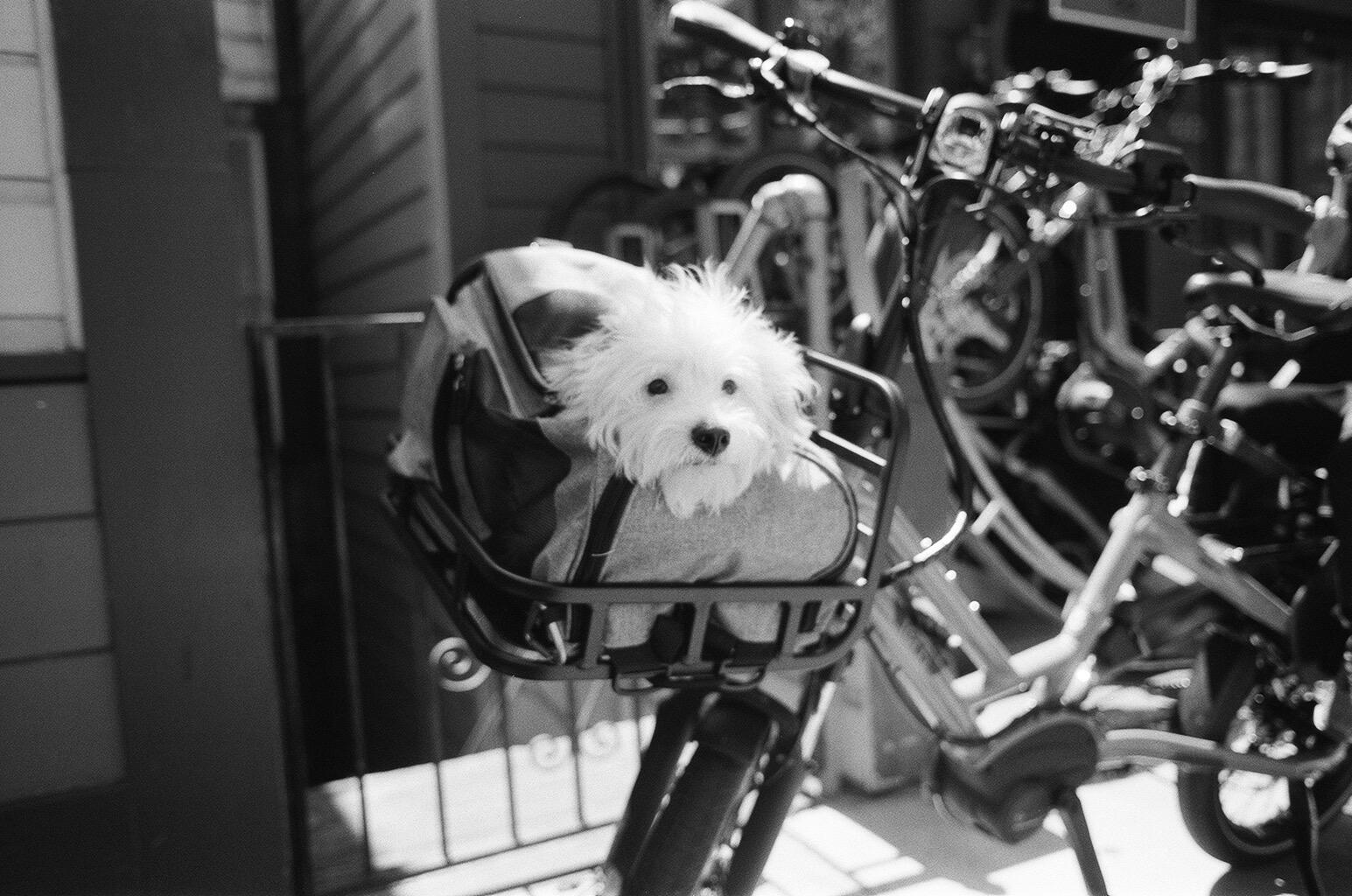 Dog on a bike, May 2021, Bernal Heights, San Francisco